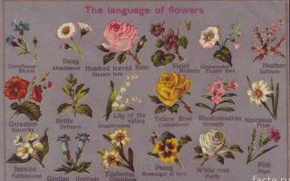 Цвета на немецком языке. перечень цветов и полезные фразы.