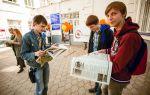 Несовершеннолетние в германии и где они могут работать